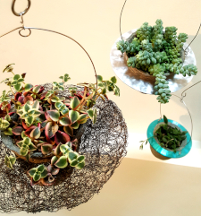 Succulents in Balanced-Earth plant mobiles