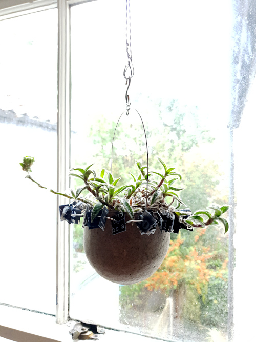 Trailing succulent in suspended pulp vessel, Balanced-Earth